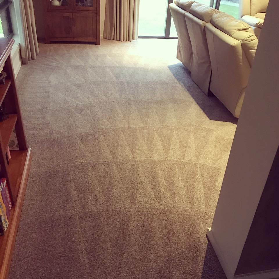 Best Carpet Steam Cleaning