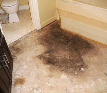 Carpet Mould Removal Slacks Creek