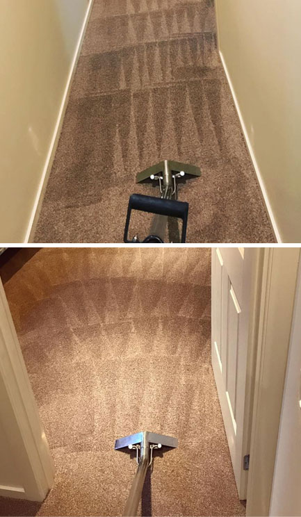 Carpet Sanitization Burringbar