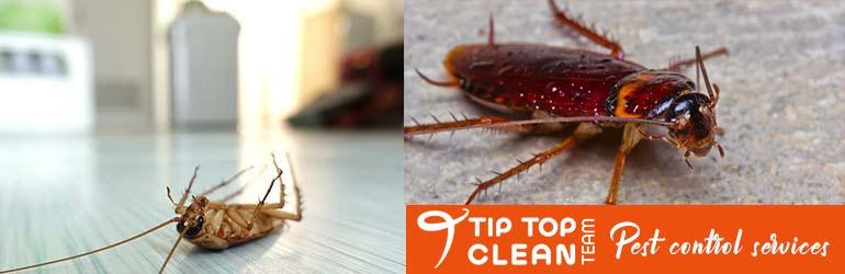 Expert Pest Control Adelaide