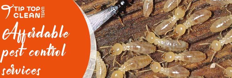 Professional Pest Control Sydney