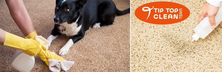 Remove Urine Stain Removal From Carpet