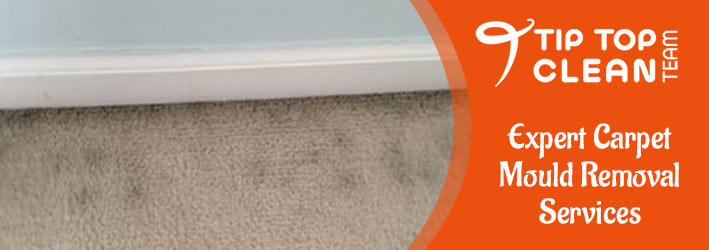 Expert Carpet Mould Removal Services